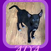 Adopt A Pet :: ADA - Jersey City, NJ