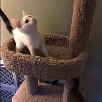 Adopt A Pet :: Timi - El Dorado Hills, CA