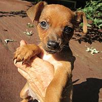 Adopt A Pet :: SIMONE - Williston Park, NY