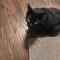 Adopt A Pet :: Onyx      CP:Lisa - Dallas, TX