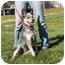 Photo 1 - Australian Cattle Dog Dog for adoption in North Wilkesboro, North Carolina - Jenny