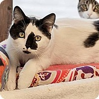 Adopt A Pet :: Loki - Byron Center, MI