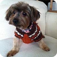 Adopt A Pet :: Georgie II - Phoenix, AZ