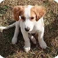 Adopt A Pet :: Darling Duke - Staunton, VA