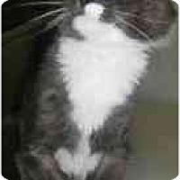 Adopt A Pet :: Fluffy - Strathmore, AB