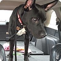 Adopt A Pet :: Maverick - Fredericksburg, VA