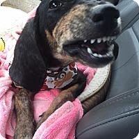 Adopt A Pet :: Dori - Vidor, TX