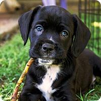 Adopt A Pet :: Jay-ADOPTION PENDING! - Sacramento, CA