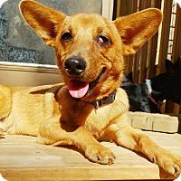 Adopt A Pet :: Montana - Kendall, NY