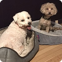 Adopt A Pet :: Wynter and Muffin - East Hanover, NJ