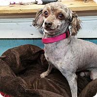 Adopt A Pet :: Kalvin - Crump, TN