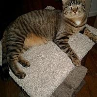 Adopt A Pet :: Ian - Taylor, MI