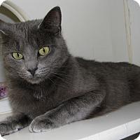 Adopt A Pet :: Cami - New Kensington, PA