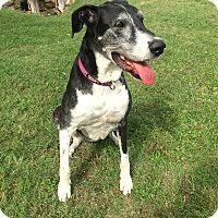 Adopt A Pet :: Solana - Austin, TX