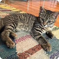 Adopt A Pet :: Reggie - Brooklyn, NY