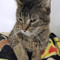 Adopt A Pet :: Bentley - Westville, IN