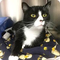 Adopt A Pet :: Sammie - Webster, MA