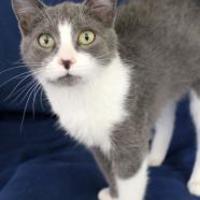Adopt A Pet :: Spring - Elkhorn, WI