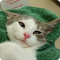 Adopt A Pet :: Zulu - Sarasota, FL