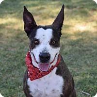 Adopt A Pet :: CALI - Henderson, NV