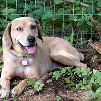 Adopt A Pet :: Mr. Stubbs - East Randolph, VT