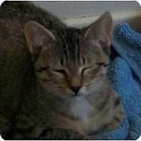 Adopt A Pet :: Mady - lake elsinore, CA