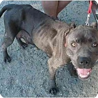 Adopt A Pet :: Mommy Girl - Bakersfield, CA