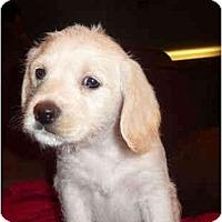 Adopt A Pet :: Wyatt - Sugarland, TX