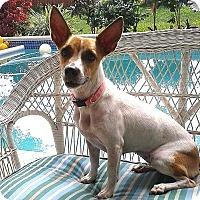 Adopt A Pet :: Emmie - Jacksonville, FL