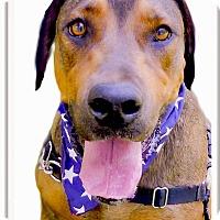 Adopt A Pet :: Duke pending - Sacramento, CA