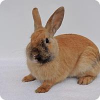 Adopt A Pet :: Dwight - Paramount, CA