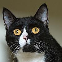 Adopt A Pet :: Phantom M - Sacramento, CA