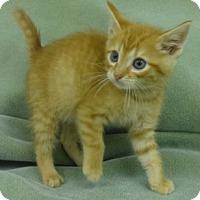 Adopt A Pet :: Joe - Olive Branch, MS