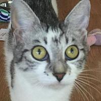 Adopt A Pet :: Dalia - West Palm Beach, FL
