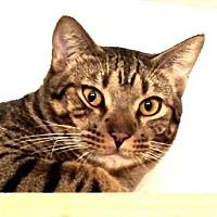 Adopt A Pet :: Toulouse - Davis, CA
