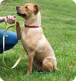 Labrador Retriever Mix Dog for adoption in Effort, Pennsylvania - Ginger Snap