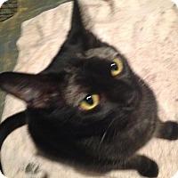 Adopt A Pet :: Danae - Cypress, TX