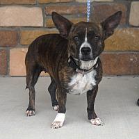 Adopt A Pet :: Darlin - Artesia, NM