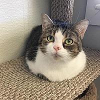Adopt A Pet :: Lauretta - Georgetown, KY