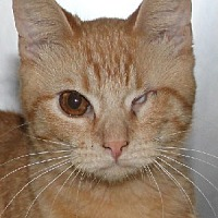 Adopt A Pet :: Patty - Savannah, MO