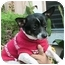 Photo 2 - Chihuahua Dog for adoption in Poway, California - Ace