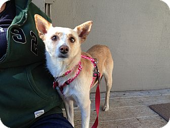 Terrier (Unknown Type, Medium) Mix Dog for adoption in Salem, Oregon - Lucy