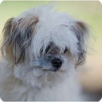 Adopt A Pet :: Yogi - Providence, RI