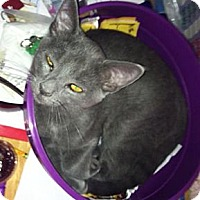Adopt A Pet :: Glenn Frey - Strongsville, OH