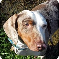 Adopt A Pet :: Moochi - San Jose, CA