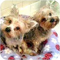 Adopt A Pet :: Puddin - West Palm Beach, FL