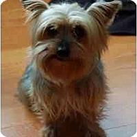Adopt A Pet :: Betty - Charlotte, NC