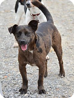 Terrier (Unknown Type, Small) Mix Dog for adoption in Grenada, Mississippi - Wally