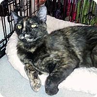 Adopt A Pet :: Jasmine - Gilbert, AZ