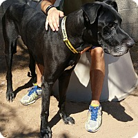 Adopt A Pet :: Scoobers/Scooby - Phoenix, AZ